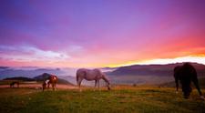 Horse,Ranch,Purple,Landscap...