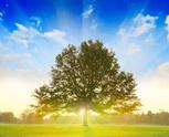 Tree,Sunrise - Dawn,Sun,Lan...