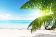 Beach,Palm Tree,Dominican R...