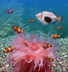 Tropical Fish,Aquarium,Unde...