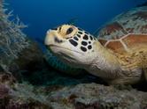 Great Barrier Reef,Coral,Au...