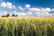 Field,Corn - Crop,Wheat,Hay...