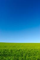 Sky,Grass,Blue,Field,Enviro...