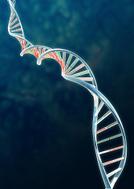 DNA,Helix,Biotechnology,Hel...