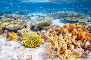 Ocean Floor,Reef,Maldives,S...
