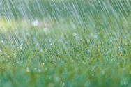 Rain,Formal Garden,Freshnes...