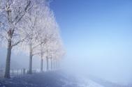 Winter,Snow,Landscape,Tree,...