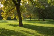 Park - Man Made Space,Tree,...