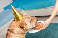 Cake,Dog,Yellow,Friendship,...
