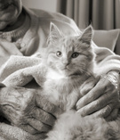 Pets,Domestic Cat,Senior Ad...