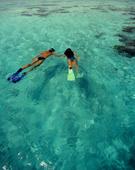 Snorkeling,Snorkel,Beach,Ca...
