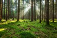 Forest,Tree,Pine Tree,Magic...