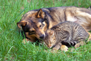 Dog,Domestic Cat,Relaxation...