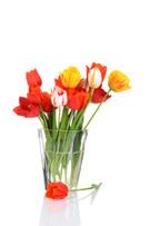 Flower,Bouquet,Vase,Single ...