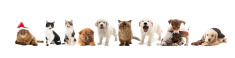 Domestic Cat,Dog,Cute,Anima...