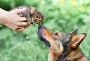 Dog,Domestic Cat,Springtime...