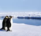 Penguin,Antarctica,Ice,Sea,...