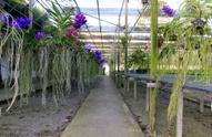 Petal,Color Image,Orchid,De...