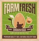 Farm,Chicken - Bird,Eggs,Si...