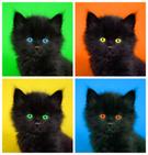 Cute,Kitten,Looking,Playful...