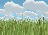 Landscape,Field,Grass Area,...