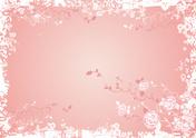 Rose - Flower,Pink Color,Ba...