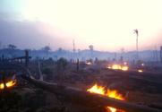 Deforestation,Rainforest,Gl...