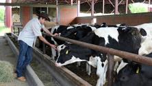 Farmer,Dairy Farm,Cow,Cattl...