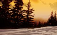 Snow,Night,Winter,Forest,Su...