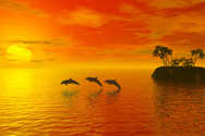 Dolphin,Sunset,Tropical Cli...