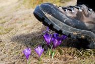 Crushed,Boot,Flower,Damaged...