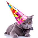Domestic Cat,Party Hat,Birt...