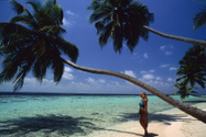 Maldives,Beach,Women,Coconu...