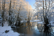 Snow,Winter,Stream,Woodland...