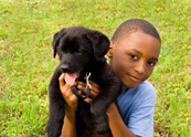 Dog,Child,Pets,Little Boys,...