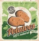Raw Potato,Farm,Field,Old-f...
