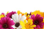 Flower,Springtime,Daisy,Fra...