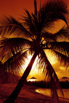 Sunset,Beach,Tropical Clima...