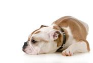 Dog,Worried,Animal,Sadness,...