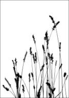 Black Color,White,Grass,Sil...