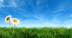 Flower,Grass,Nature,Summer,...