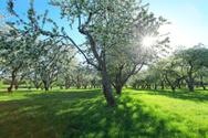 Outdoors,Fruit,Rural Scene,...