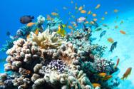 Reef,Underwater,Coral,Fish,...