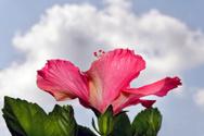 Flower,Leaf,Plant,Cloud - S...