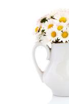 Vase,Daisy,Flower,Single Fl...