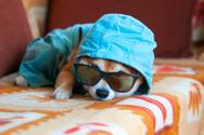Pets,Eyeglasses,Puppy,Domes...