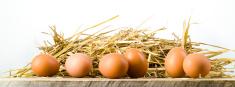 Farm,Eggs,Straw,Healthy Eat...