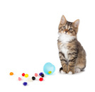 Domestic Cat,Candy,Isolated...
