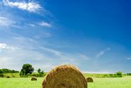 Needle in a Haystack,Haysta...