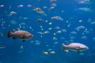 Aquarium,Fish,Underwater,Sh...
